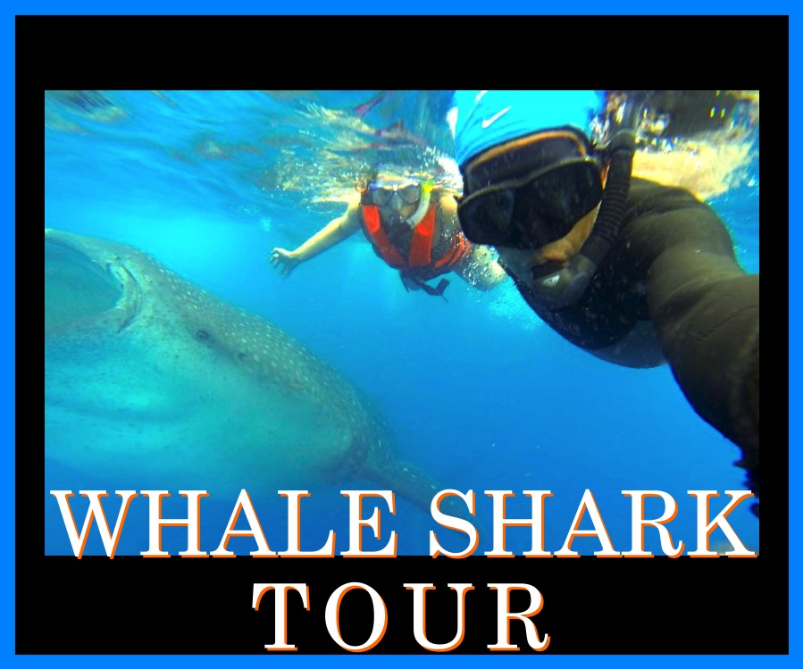 WHALE SHARK TOUR HERE